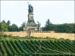 Rudesheim vines with famous Niederwald Monument